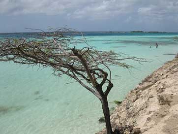 Aruba Scenic Beach Tree