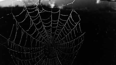 Cobweb Dew Black Web
