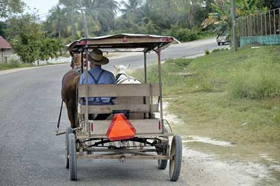 Central-America Carry Horse-Drawn-Carriage Belize