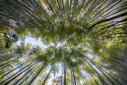 Bamboo Green Nature Forest