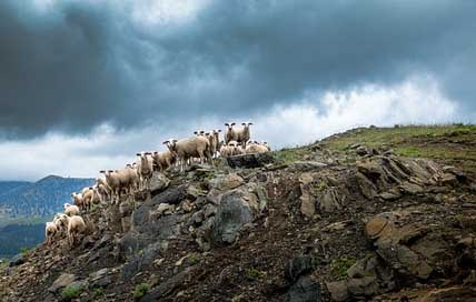 Greece Clouds Hill Sheep