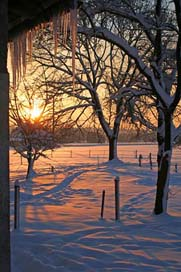 Sunrise Winter Icicle Snow
